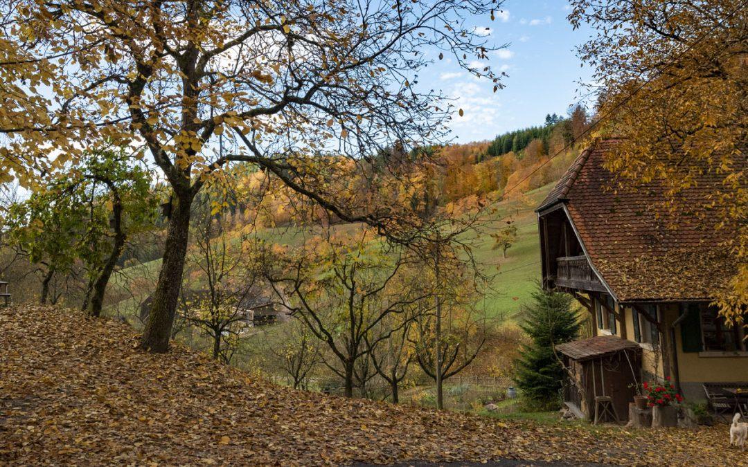 Der Herbst ist in vollem Gange