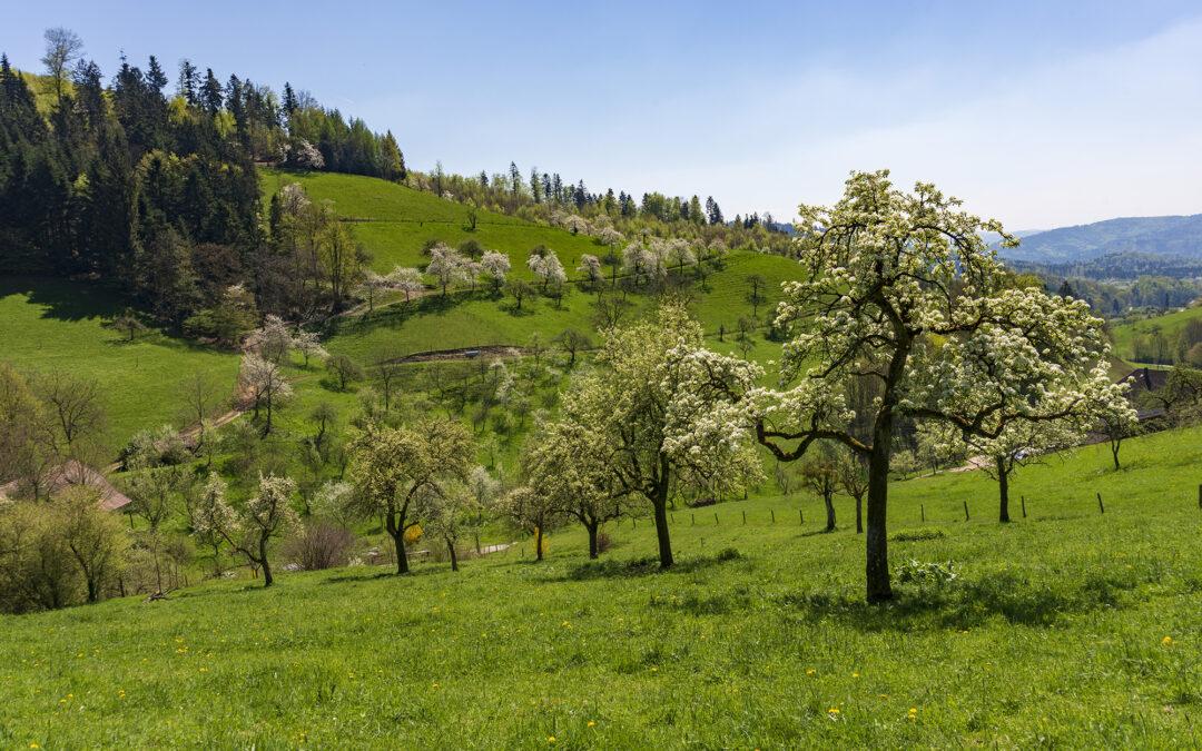 Endlich Frühling – die Obstblüte auf unserem Hof