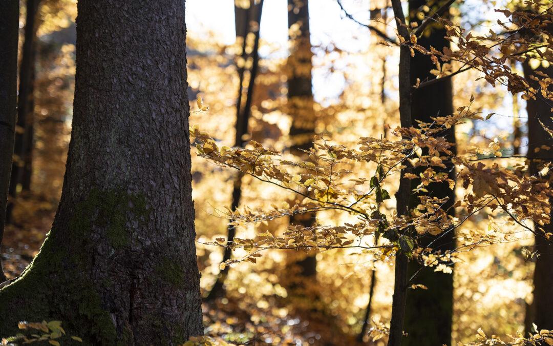 Der Herbst ist schon da